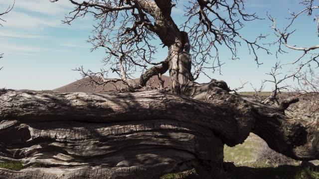 dramatische sicht auf einen bare baum - bare tree stock-videos und b-roll-filmmaterial