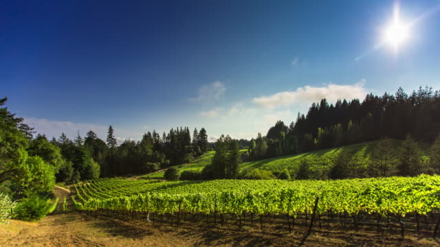 Dramatic Windy Day in California Winery - Time Lapse