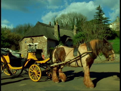 MS draught horse in harness with yellow carriage
