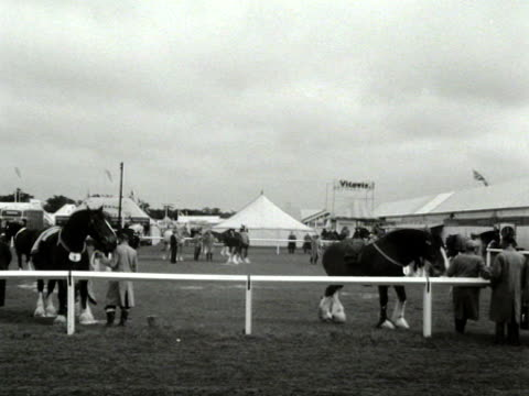 Draught horses are prepared for judging at the Windsor Royal Show