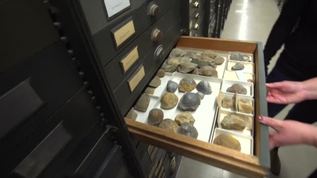drawers containing fossils in the smithsonian museum's collection - open drawer stock videos & royalty-free footage
