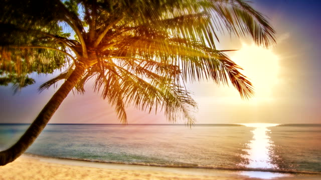 dream holiday - palm tree stock videos & royalty-free footage