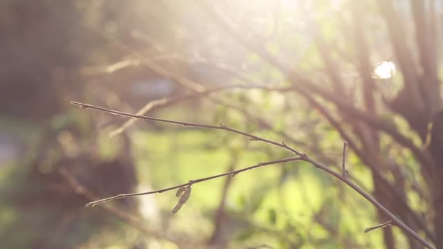 Dreamy image of branches bathed in sunlight