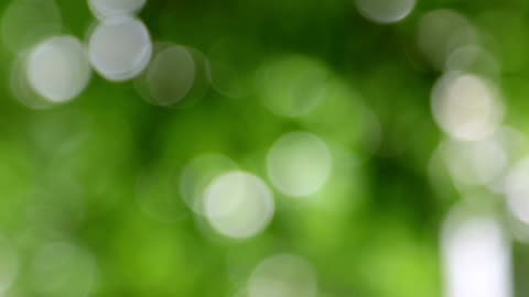 dreamy nature bokeh background - soft focus stock videos & royalty-free footage