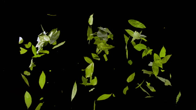 slo mo ld dried bay leaves exploding into the air against black background - ingredient stock videos & royalty-free footage