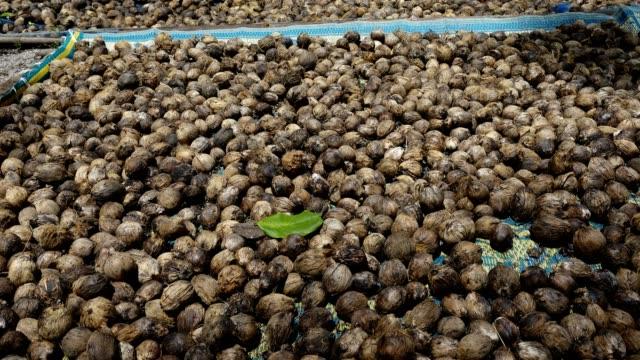 床の乾燥のビンロウの実 - 種点の映像素材/bロール