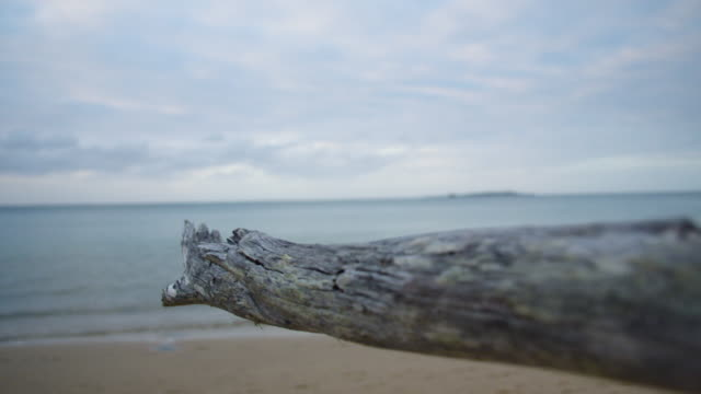 stockvideo's en b-roll-footage met a dried driftwood in close up - drijfhout