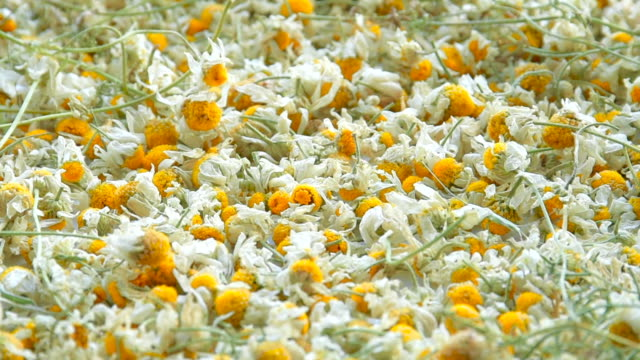 dried flowers camomile