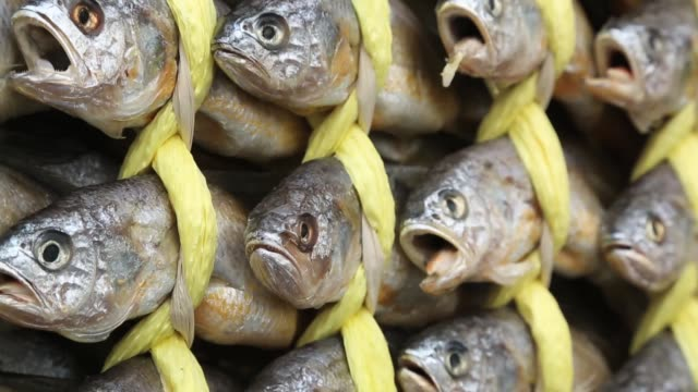 dried gulbi (this is how koreans preserve salt-picked yellow corvina from a thousand years ago) - medium group of objects stock videos & royalty-free footage