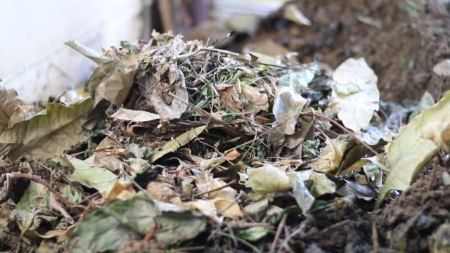 torkade blad för kompostering på husförening - mull bildbanksvideor och videomaterial från bakom kulisserna