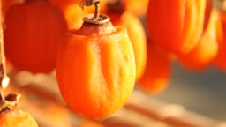 Dried persimmon.Traditional Japanese food.