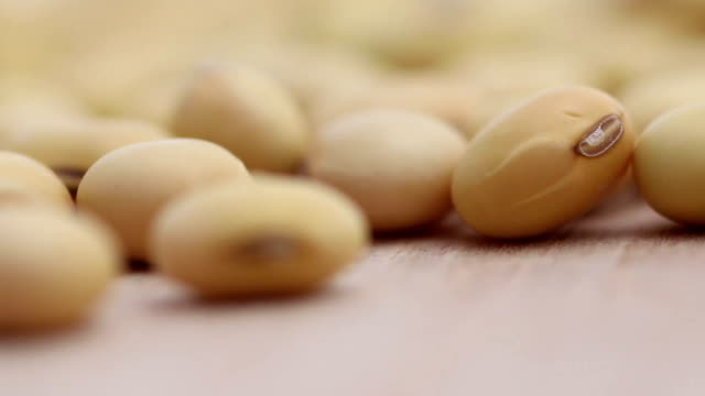 dried soybeans - soya bean stock videos & royalty-free footage