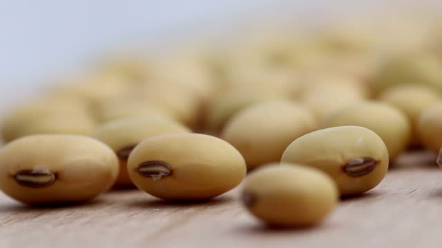 dried soybeans - alternative energy stock videos & royalty-free footage