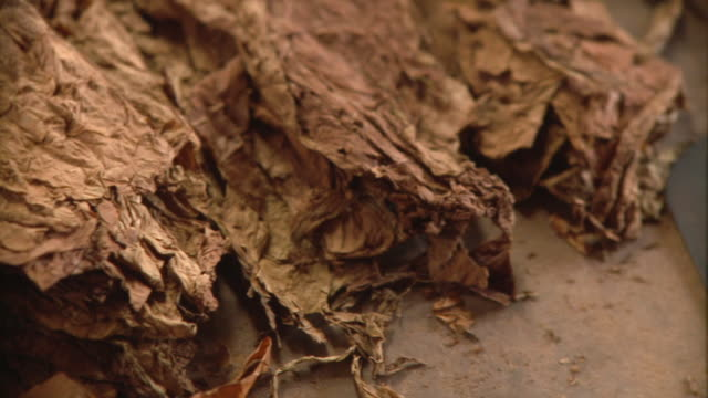 cu pan dried tobacco leaves and blade on table / san luis, pinar del rio, cuba - dry stock videos & royalty-free footage