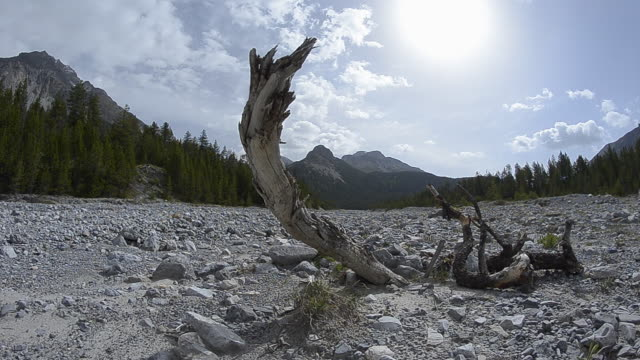 dried up river bed on hot summer day - dürre stock-videos und b-roll-filmmaterial