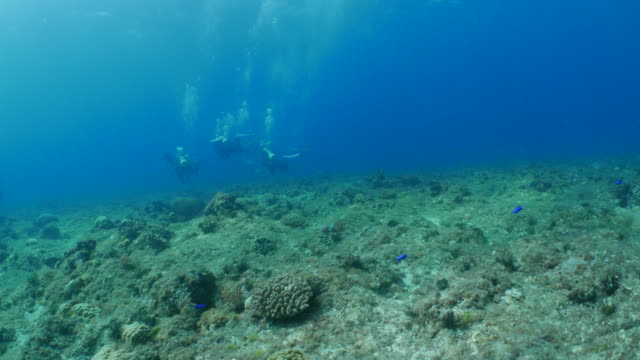 Drift diving under strong current in coral reef