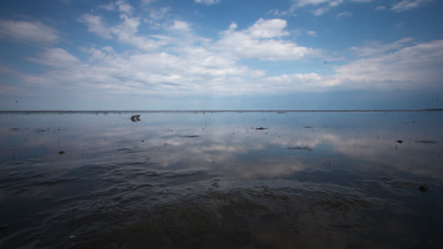 tl drifting clouds reflected on shallow water, delaware - gezeiten stock-videos und b-roll-filmmaterial