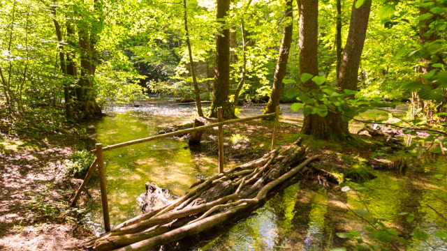 driftwood bridge crossing idyllic forest stream, steady cam - wood material stock videos & royalty-free footage