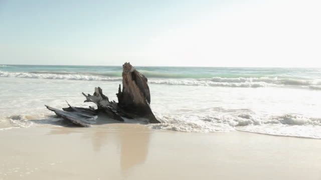 Driftwood in the surf on sandy beach