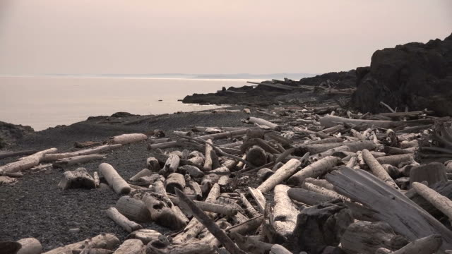 driftwood littering grey beach and pink sky above quiet water - littering stock videos & royalty-free footage
