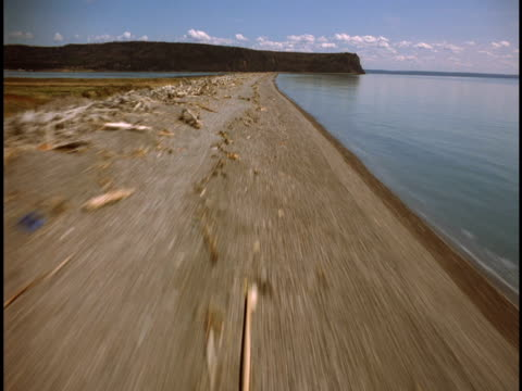 vídeos de stock, filmes e b-roll de driftwood litters a long stretch of beach on the bay of fundy, canada. - península