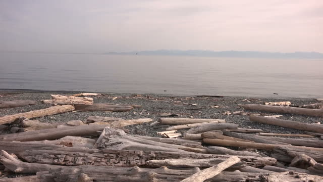 Driftwood on a Beach in Seattle
