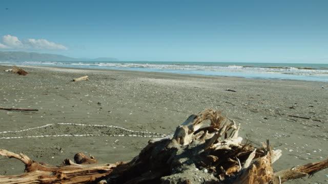 stockvideo's en b-roll-footage met drijfhout op het verlaten strand - drijfhout