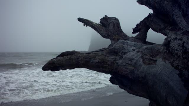 stockvideo's en b-roll-footage met ms pan slo mo driftwood on shore  of ocean /  washington, united states - drijfhout