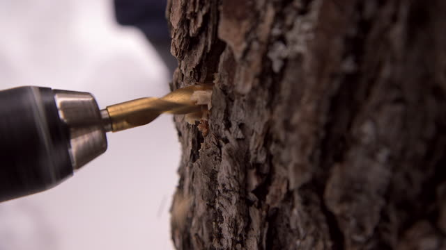 stockvideo's en b-roll-footage met cu of drill making hole in maple tree - supersensorisch