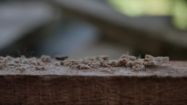 vidéos et rushes de bois de forage avec une perceuse sans fil - téléphone sans fil