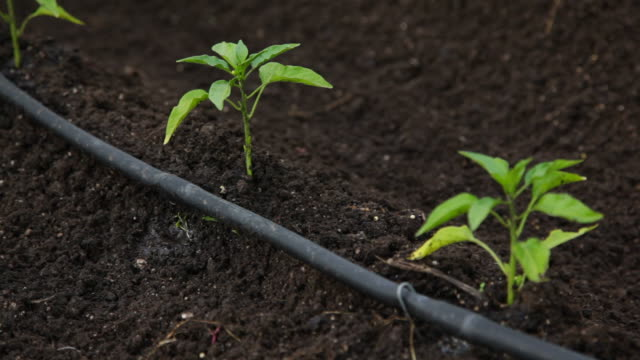 drip irrigation system in action - irrigation equipment stock videos and b-roll footage