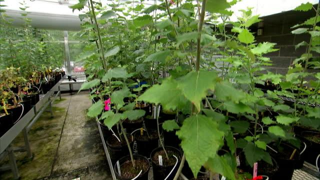 80点のplant Nurseryのビデオクリップ 映像