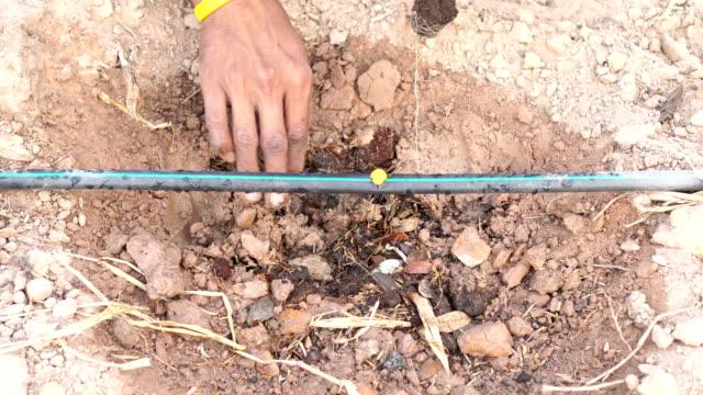 drip irrigation - attrezzatura per l'irrigazione video stock e b–roll