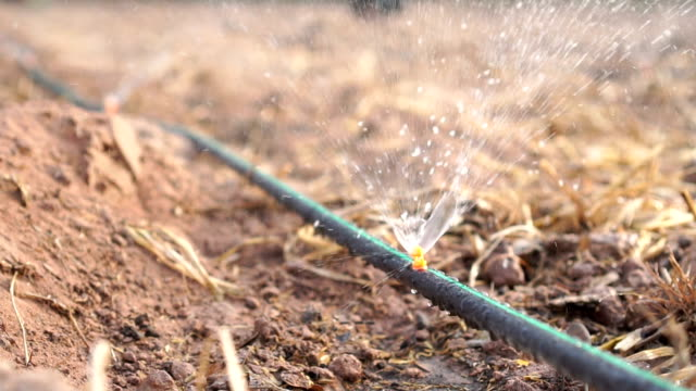 drip irrigation - cucumber stock videos and b-roll footage
