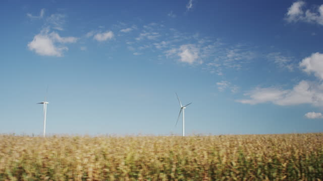 Drive by - Two wind powered turbines turn in a large field of corn.