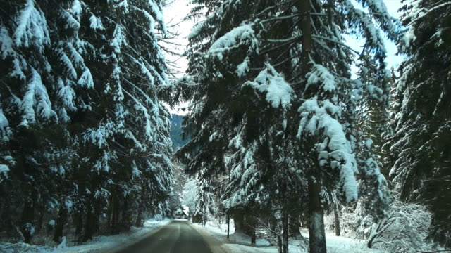 pov drive through winter forest - unterwegs stock videos & royalty-free footage