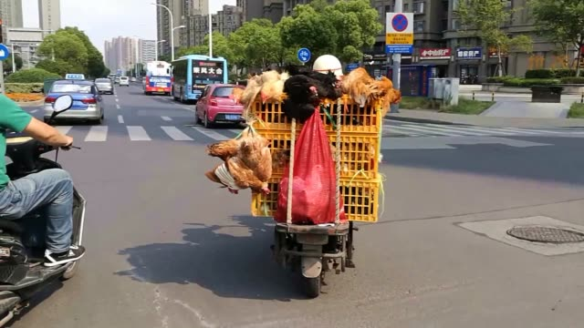 a driver rides an electric bike carrying chickens on the back of a vehicle on june 7 2019 in wuxi jiangsu province of china - wuxi stock videos and b-roll footage