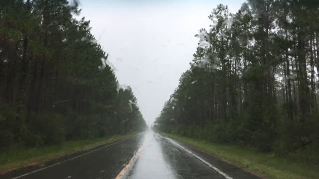 driver view along long curving forest road in rain - florida us state stock videos & royalty-free footage