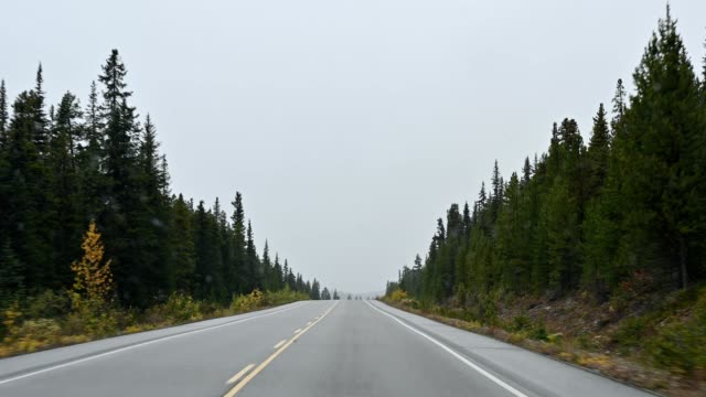 driver view on highway with snowing in autumn pine forest and rocky mountains at banff national park - diminishing perspective stock videos & royalty-free footage