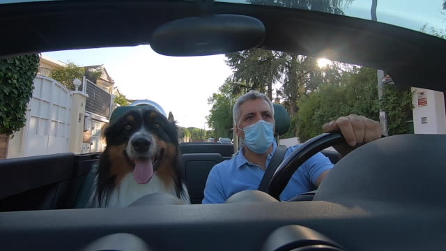 driver with face mask and dog take a ride on a convertible - dog convertible stock videos & royalty-free footage