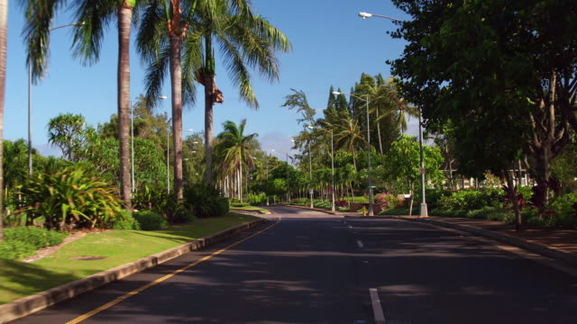 driver's pov driving down a road with palm trees on either sides - kahuku stock videos & royalty-free footage