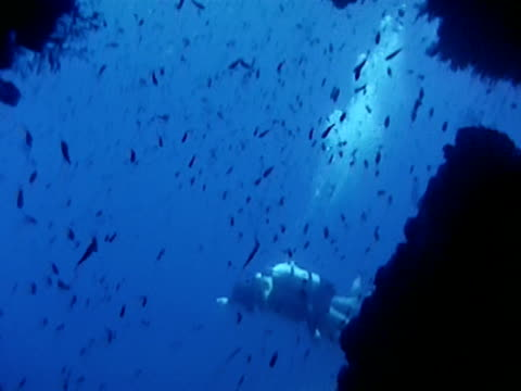 drivers gliding overhead. divers descending coral reef face, small fish in silhouette fg. - tauchgerät stock-videos und b-roll-filmmaterial