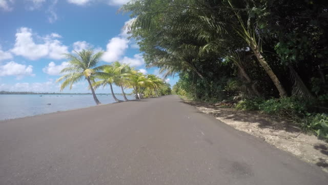 drivers pov, road lined with tropical tree and the sea. end of the road - tropical tree stock videos & royalty-free footage