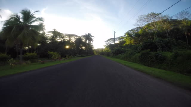 drivers pov, road lined with tropical tree - tahitian culture stock videos & royalty-free footage
