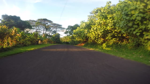 stockvideo's en b-roll-footage met drivers pov, road lined with tropical tree - polinesische cultuur