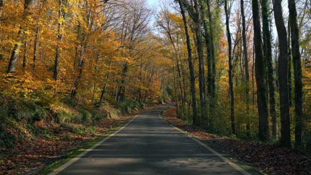driveway in the woods in autumn (time-lapse) - natural parkland stock videos & royalty-free footage