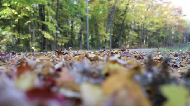 driving a country road in autumn - 4x4 video stock e b–roll