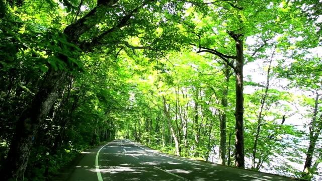 ゴルフ、森林の曲がりくねった道
