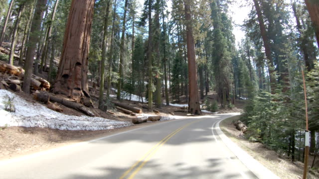 kör en slingrande väg upp till sequoia national park - förarperspektiv bildbanksvideor och videomaterial från bakom kulisserna