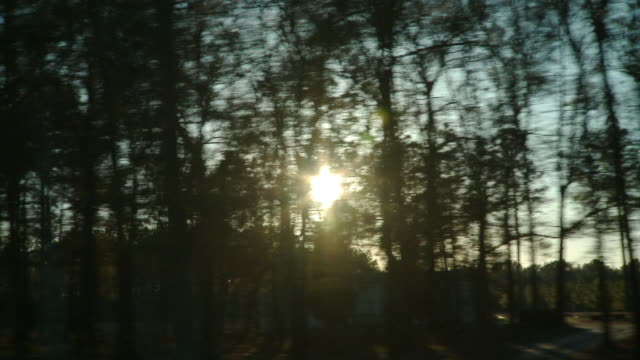 side pov driving along forest at sunset, live oak, florida, usa - side view stock videos & royalty-free footage